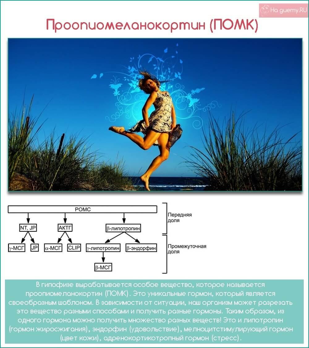 Проопиомеланокортин (ПОМК)