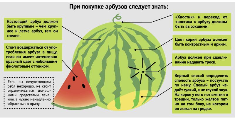 арбуз инфографика