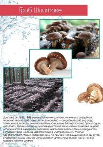 Шиитаке - японский лесной гриб