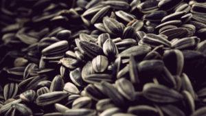 толстеют ли от семечек